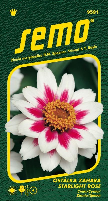 Gvaizdūnė Zahara Starling Rose 15s