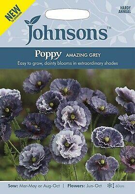 Aguona birulė Amazing Grey (Papaver rhoeas) 500s