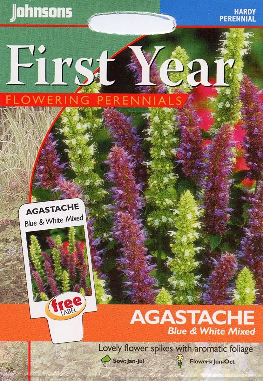 Pankolinės kinmėtės (anyžiniai lofantai) ( Agastache foeniculum) 200s