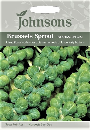Briuseliniai kopūstai Evesham Special (lot. Brassica oleracea convar. acephala var. gemmifera) 500s