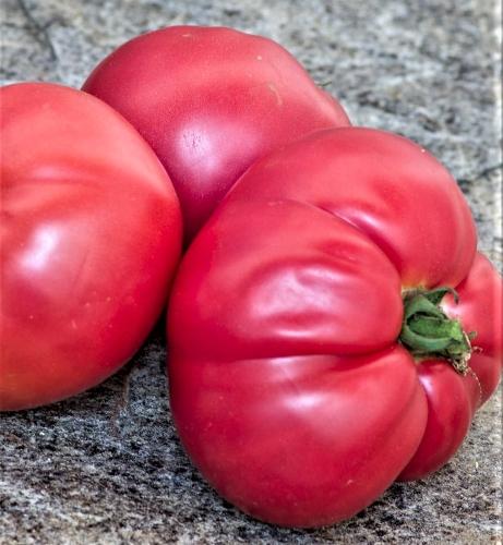 Valgomieji pomidorai Favoryt