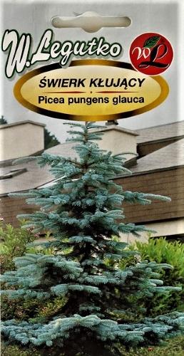 Dygioji eglė (melsvaspyglė)  Picea pungens glauca) Sėklų 0,,1g
