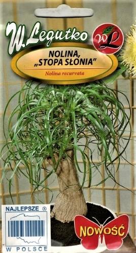 Nolina (Nolina Recurvata) Sėklų 0,3g.