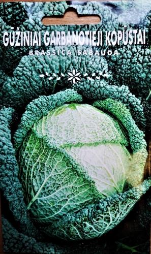 """Savojos kopūstai """"Vertus 2"""" (Brassica sabauda) 280s"""