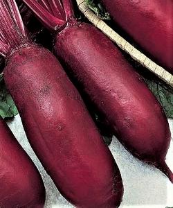 Raudonieji burokėliai Cylindra (lot. Beta vulgaris var. conditiva)