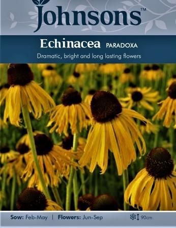 Ežiuolė paradoxa  Echinacea paradoxa) 20s