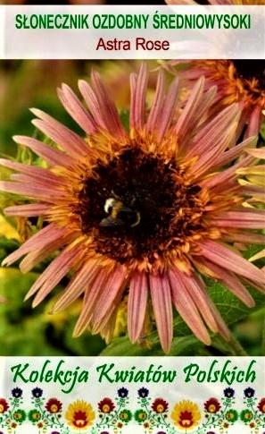 Tikrosios saulėgrąžos Astra Rose (lot. Helianthus annuus) Sėklų 1g