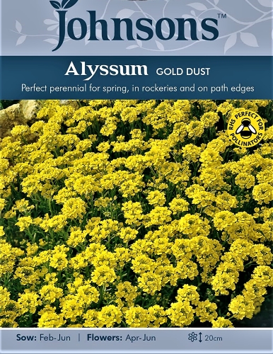 Kalniniai laibeniai Gold Dust (lot. Aurinia saxatilis) 250s
