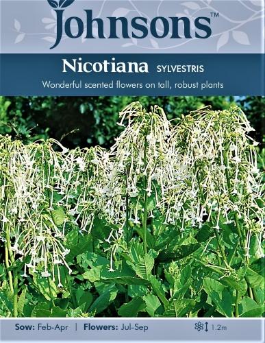 Miškiniai tabakai Sylvestris (lot. Nicotiana sylvestris) 2000s
