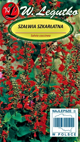 Skaistažiedžiai šalavijai (lot. Salvia coccinea) Sėklų 0,2g