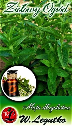 Miškinės mėtos (lot. Mentha longifolia) Sėklų 0,1g
