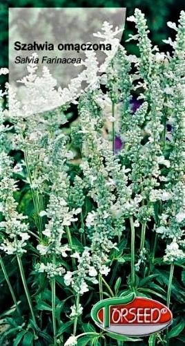 Miltuotasis šalavijas White Victory (lot. Salvia farinacea) Sėklų 0,5g
