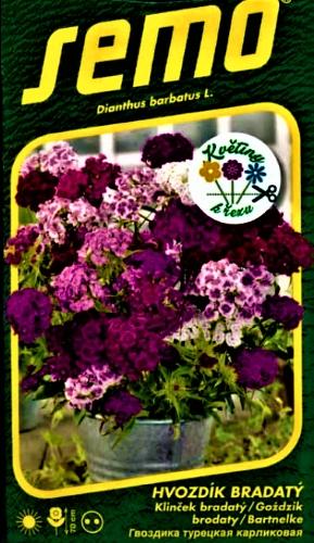 Šiurpinis gvazdikas Fragrance Mix (lot. Dianthus barbatus) Sėklų 0,5g