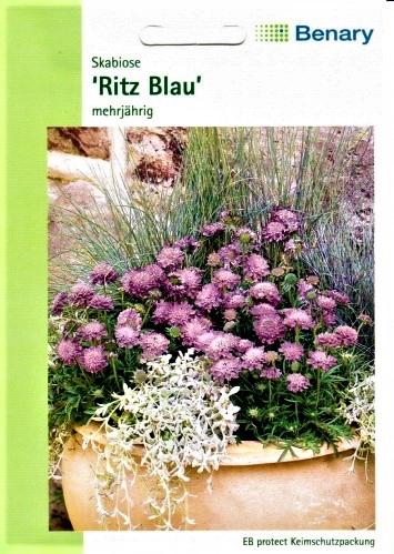 Japoninės žvaigždūnės Ritz Blau (lot. Scabiosa japonica var. alpina) 35s